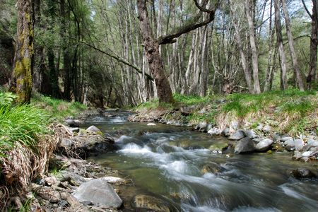naturel:                                     Stream in the forest from Cyprus nature.l