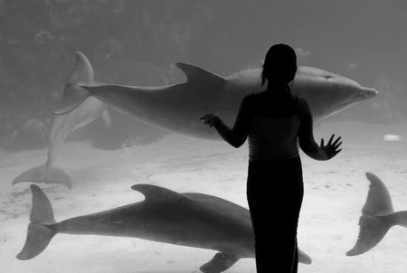 Girl and the dolphins        Stock Photo