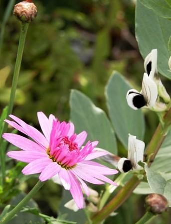 Daisy flower  Stock Photo - 4326165