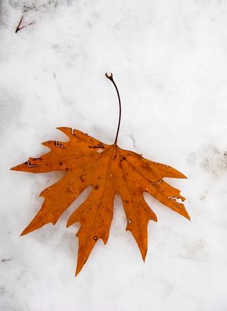 Autumn maple leaf on snow Stock Photo - 4326168