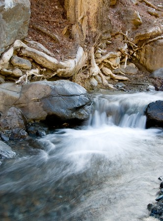 boles: Water stream and tree roots from Troodos area in Cyprus.