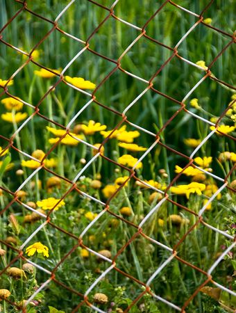 Flowers behind a wire mesh fence Stock Photo - 4760453