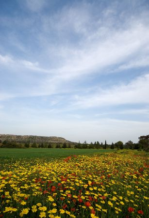 Spring landscape with wild flowers, grass and deep blue sky Stock Photo - 4809939