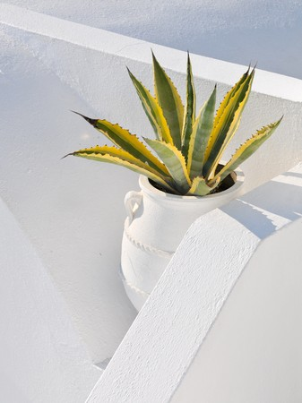 Cactus plant between white walls at Santorini Island, Greece. Stock Photo - 8139189