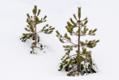 Winter Landscape Stock Photo - 8784321