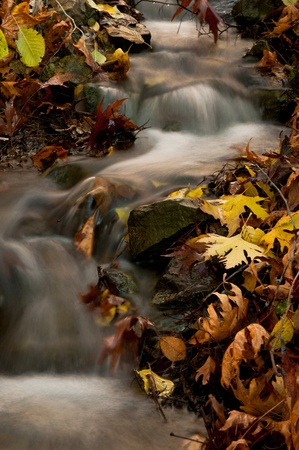 Water stream in the forest at Troodos mountains in Cyprus Stock Photo - 11754366