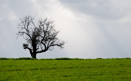 Landscape, Lonely tree in a green meadow Stock Photo - 11754357
