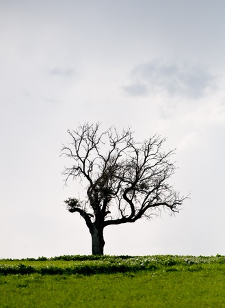 Landscape, Lonely tree in a green meadow on an overcast day Stock Photo - 12080823