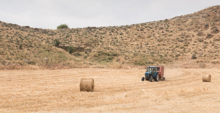hay bales: Tractor harvesting in a cereal field with hay bales.