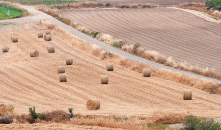hay bales: Countryside agriculture farmland with golden hay bales after harvesting  from the island of Cyprus