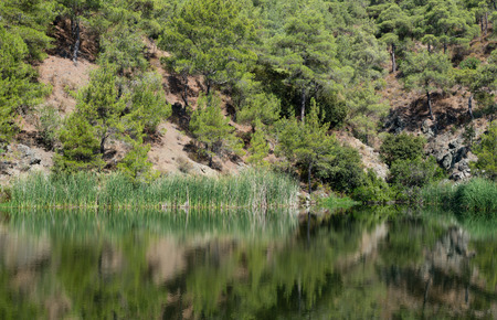 cyprus tree: Forest pine tree on a mountain reflected in a lake. Picture taken at Troodos mountains in Cyprus