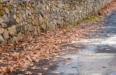 road autumnal: Empty forest road and brick fence with autumn yellow maple leaves on the ground.
