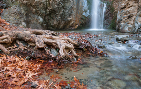 cyprus tree: Waterfall splashing on a small lake with beautiful yellow leaves and tree roots. Waterfall is  Millommeri and it is located near Platres village at  at the mountain range of Troodos in Cyprus