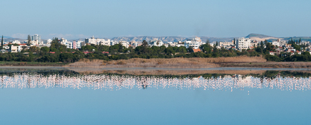 rural skyline: Panoramic view of the city of Larnaka in Cyprus with flamingo birds in the salt lake. Stock Photo