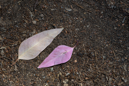 dead leaves: Violet dead  leaves on the ground Stock Photo