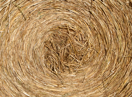 bales: Deatails of a Round bale of hay after harvesting
