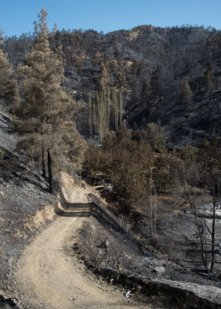 environmental damage: Forest and trees after a big forest fire at Troodos mountains in Cyprus which created a big environmental damage.