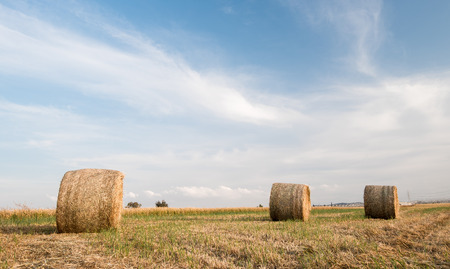 harvested: Agriculture field of Round bales of hay after harvesting.  Stock Photo