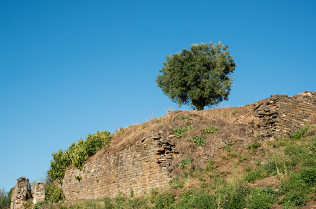 Single beautiful olive tree standing at the edge of a cliff with clear blue sky.