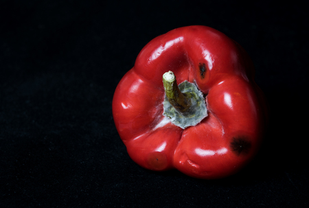 Red moldy pepper isolated on a black background