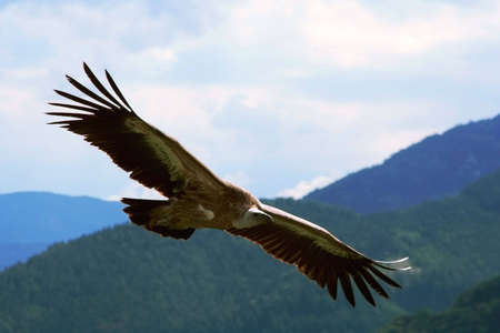hight: Hight flying griffin above the Alps