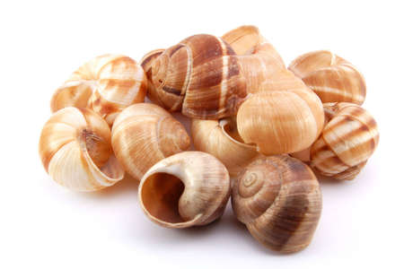 mucus: Snail shells on white background  Stock Photo