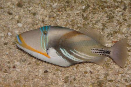 Tropical fishes in an aquarium Stock Photo