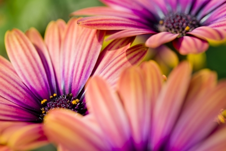 very colorful daisies Stock Photo