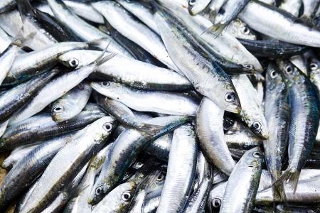 Close up photograph of a bunch of sardines