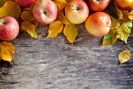 Close up photograph of a colorful fall backdrop Stock Photo - 45048334