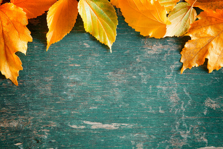 weathered wood background: Close up photograph of a colorful fall backdrop