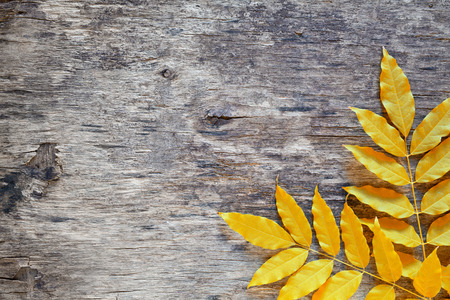 amarillo y negro: Close up photograph of some leaves on a wooden board