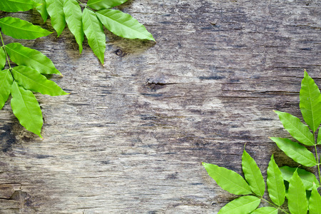 hojas antiguas: Close up photograph of some leaves on a wooden board