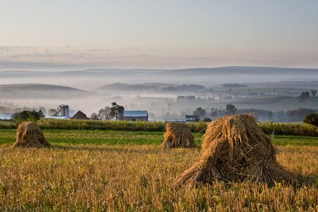 reaping: Shocks of wheat in foreground overlooking misty valley with farm Stock Photo