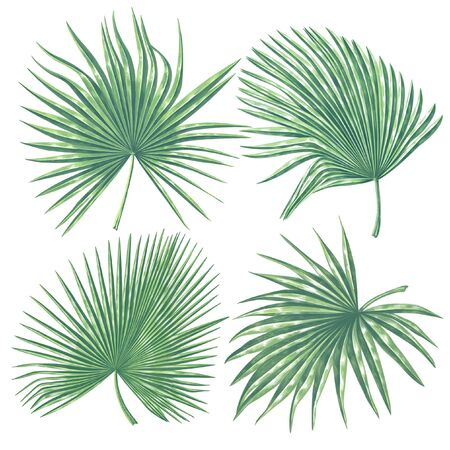 Tropical leaves collection. Palm leaves in realistic style with high details. Exotic elements for cosmetics, health care products, wedding or summer background, patterns, wallpapers, prints.
