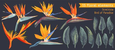 Set of floral elements with Strelitzia Reginae, tropical flowers and leaves. Vector, isolated on white. Realistic style, hand drawn. South African plant, called crane flower or bird of paradise.