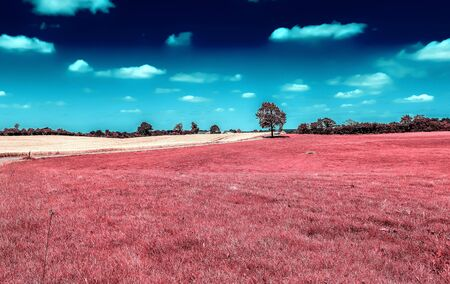 Beautiful purple infrared landscape with fields and trees