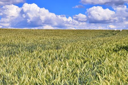 Beautiful view on agricultural crop and wheat fields on a sunny summer day found in northern Europe