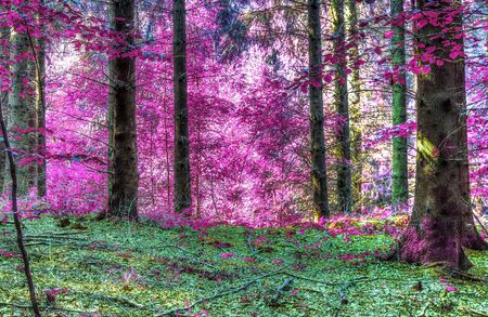 Beautiful infrared forest landscape in pink and purple colors