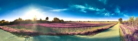 Beautiful and colorful fantasy landscape in an asian purple infrared photo style Imagens
