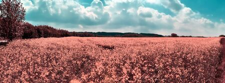 Beautiful and colorful fantasy landscape in an asian purple infrared photo style Stock Photo