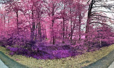 Beautiful fantasy infrared view into a magical purple forest