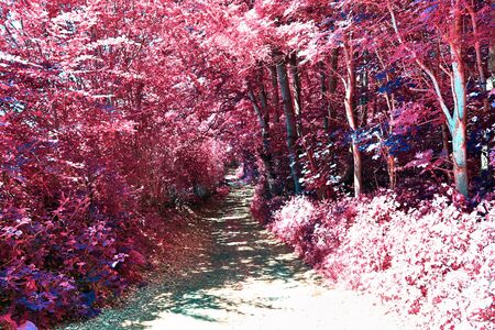 Beautiful fantasy infrared view into a magical purple forest Stock Photo