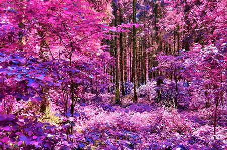 Beautiful fantasy infrared views into a mystery purple forest