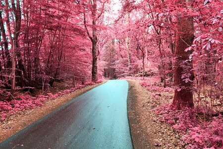 Stunning infrared view on purple fantasy landscapes with some ashpalt roads