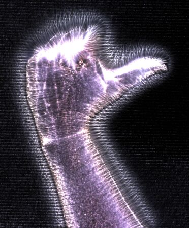 3D-Illustration of a glowing human female hand with a blue kirlian aura showing different symbols