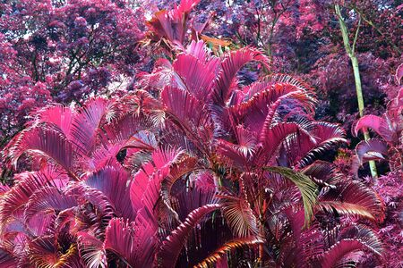 Beautiful infrared shot of tropical plants and leaves on the Seychelles