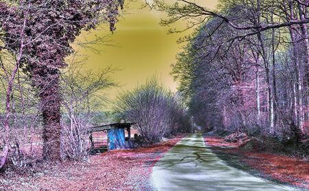 Beautiful purple infrared landscape with a road and trees