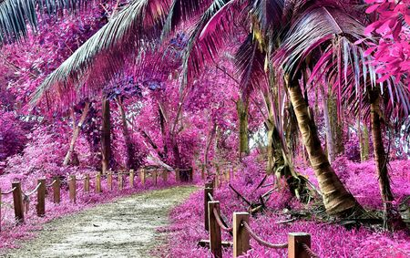 Beautiful pink and purple infrared shots of tropical palm trees on the Seychelles Stock Photo