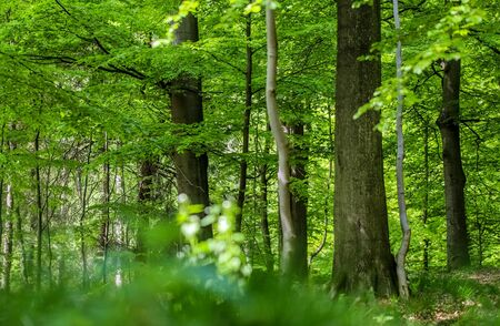 Beautiful view into a dense green forest with bright sunlight casting deep shadow
